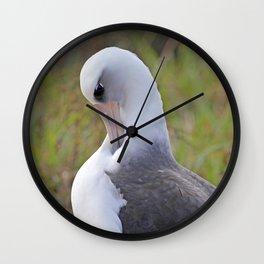 Laysan Albatross Wall Clock