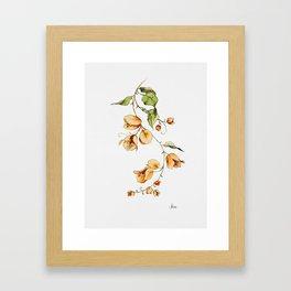 Orange Bougainvillea Illustration Framed Art Print