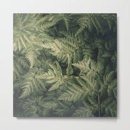 SHADED GREEN FERN Metal Print