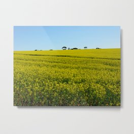 Yellow Canola Flower Field in Spring. Caledon, South Africa Metal Print