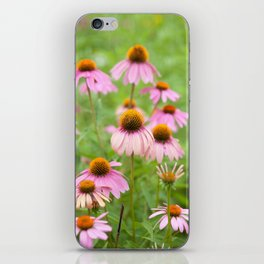 Pink Echinacea Wildflower iPhone Skin