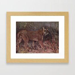 Vintage Puma Painting (1909) Framed Art Print