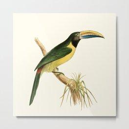 Green Aracari Bird Illustration by William Swainson Metal Print