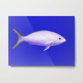 Yellow Tailed Snapper From Side Metal Print
