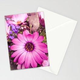Ostentatious Osteospermum Stationery Cards