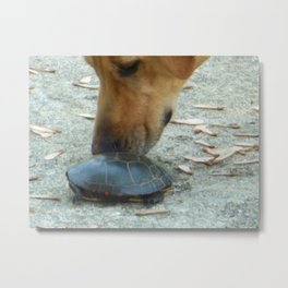Curious Dog Painted Turtle Metal Print