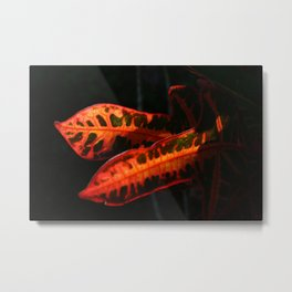 Dramatic Crotons DP161026a Metal Print