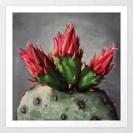 Blooming Opuntia Cactus Flower Art Print