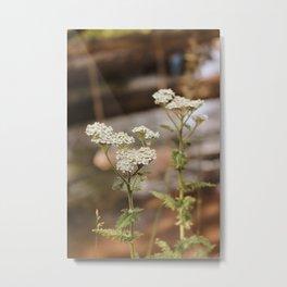 Whimsical White Flowers in Vintage Metal Print