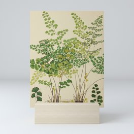 Maidenhair Ferns Mini Art Print