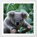 Koala and Eucalyptus by erikakai