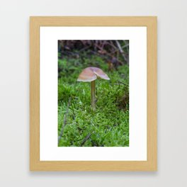 Tiny Fungi. Framed Art Print