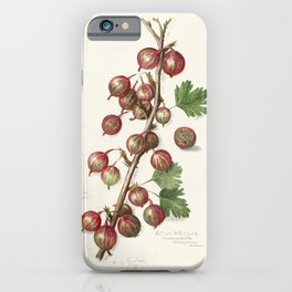 Gooseberries (Ribes)(1090) by Amanda Almira Newton iPhone Case
