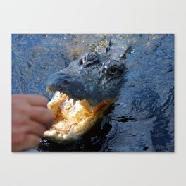 Catch the alligator Canvas Print