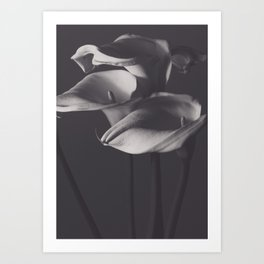 Calle lilies, photo, fine art, three flowers photography, still life, nature lover, Robert Mappletho Art Print