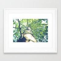 birch Framed Art Prints featuring Birch by nadja-elli
