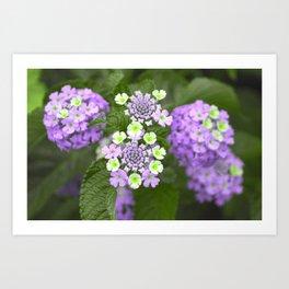 Lavender Floral Art Print