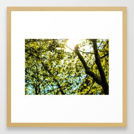 Sunshine in Astoria Framed Art Print