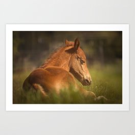 Cute Foal Laying Down Art Print