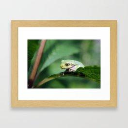 Gray Tree Frog Framed Art Print