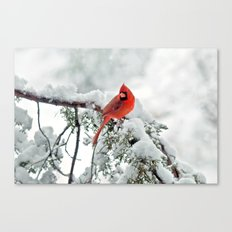 Cardinal on Snowy Branch #2 Canvas Print