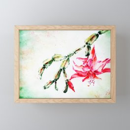 Winter Cactus-Schlumbergera Framed Mini Art Print