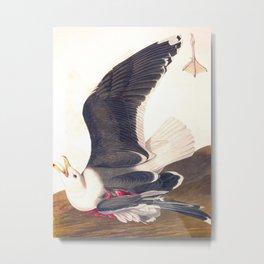 Black Backed Gul John James Audubon Scientific Vintage Illustrations Of American Birds Metal Print