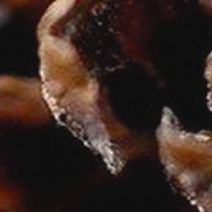 PINECONE MACRO - 11118/3 Leggings