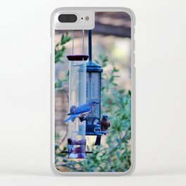 Two Eastern Bluebirds Clear iPhone Case