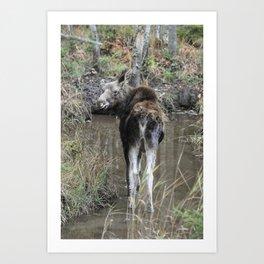 Moose Calf Art Print