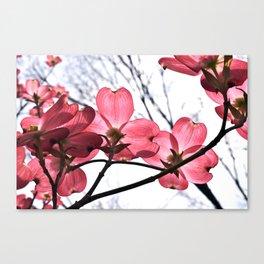 Dogwood 04 Canvas Print