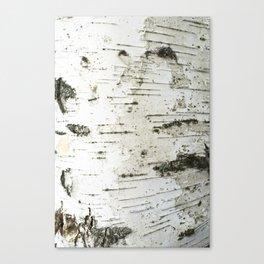 Birch bark pattern Canvas Print