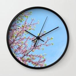 Blossoming Cercis siliquastrum or Judas tree Wall Clock