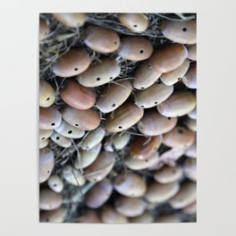 Acorns with Holes No.3 Poster