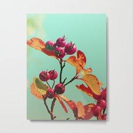 Berrys in sunlight Metal Print