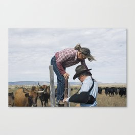 Texas Cattle Counting Canvas Print