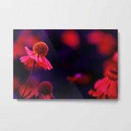 last Summerflowers in the dark Metal Print