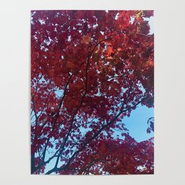 Only red skies Poster