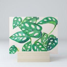 Tropical Little Swiss Monstera  Mini Art Print