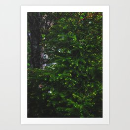 Spruce To Be Art Print