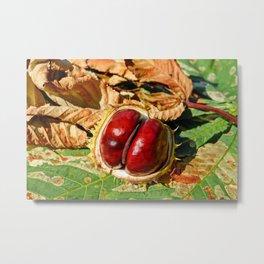 Chestnut Metal Print