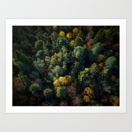 Forest Landscape - Aerial Photography Art Print