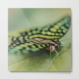 Dotted Insect Metal Print