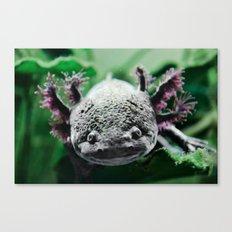 Axolotl Horst Canvas Print