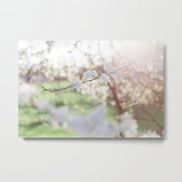 And then she bloomed. Metal Print