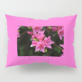 Pink Azelaea Spring Flowers Pretty Flowers Blossoms Nature Flora Pillow Sham
