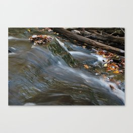 Forest Stream 2 Canvas Print