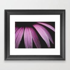 Lavender  Bloom Framed Art Print