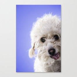 Olly Wally Ding Dong Canvas Print