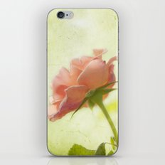 Vintage light pink rose iPhone & iPod Skin